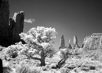 Infrared Rock and Trees