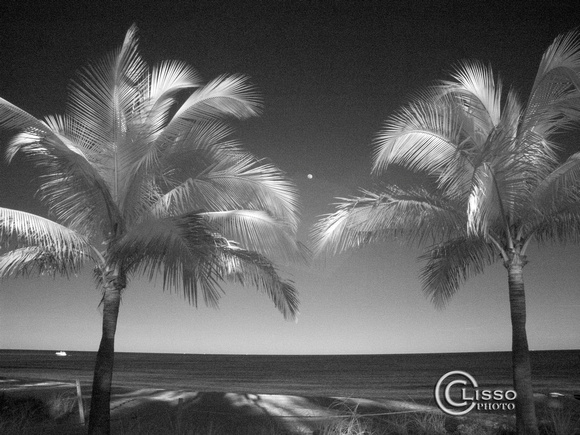 Palm trees and moon_infrared